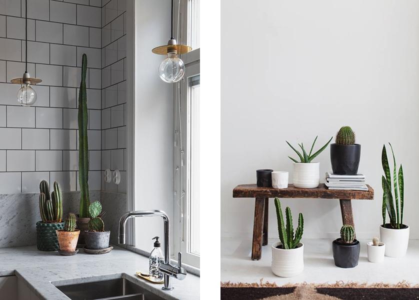 kaktusai-2