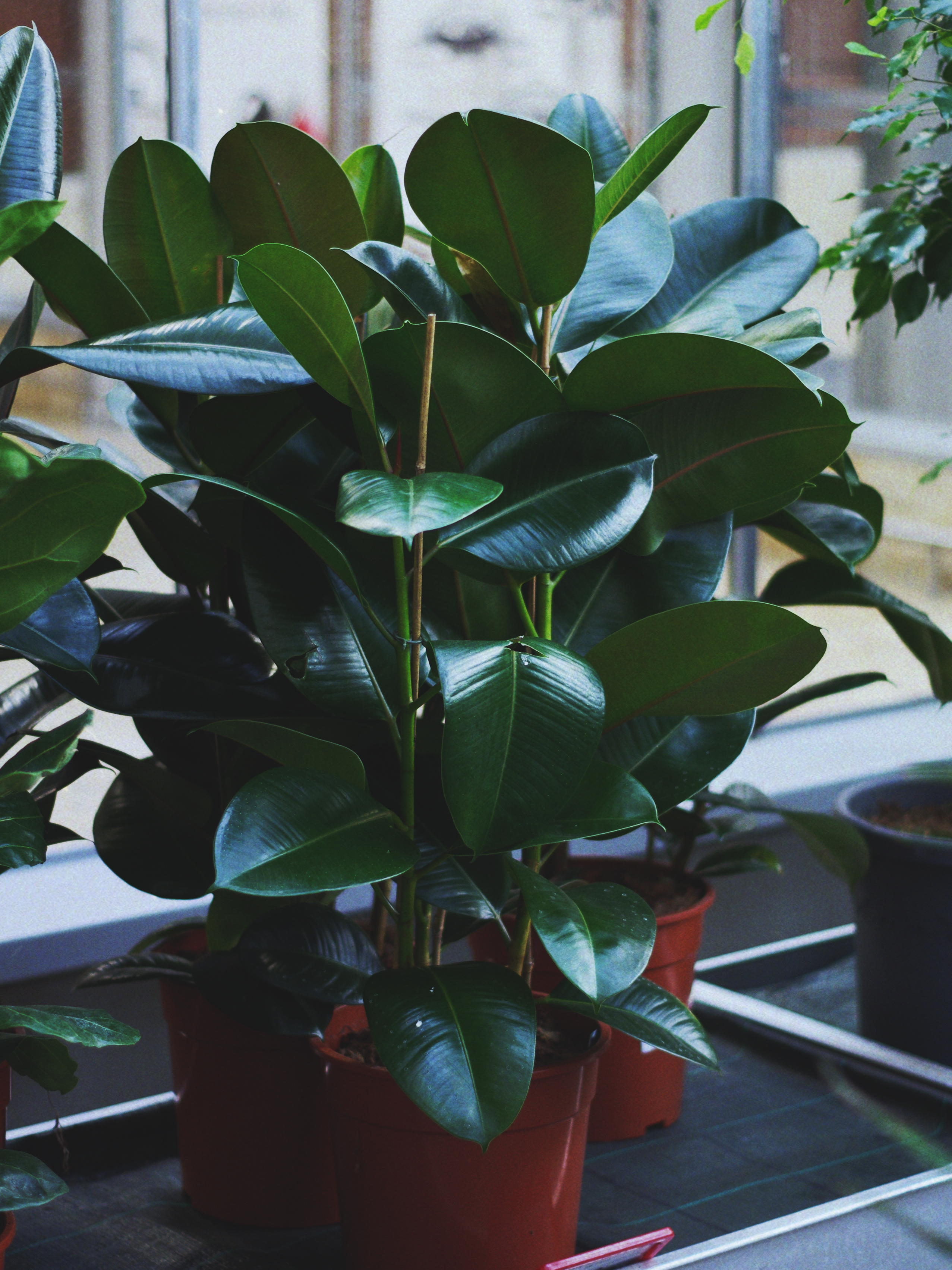 kambariniai-augalai-012