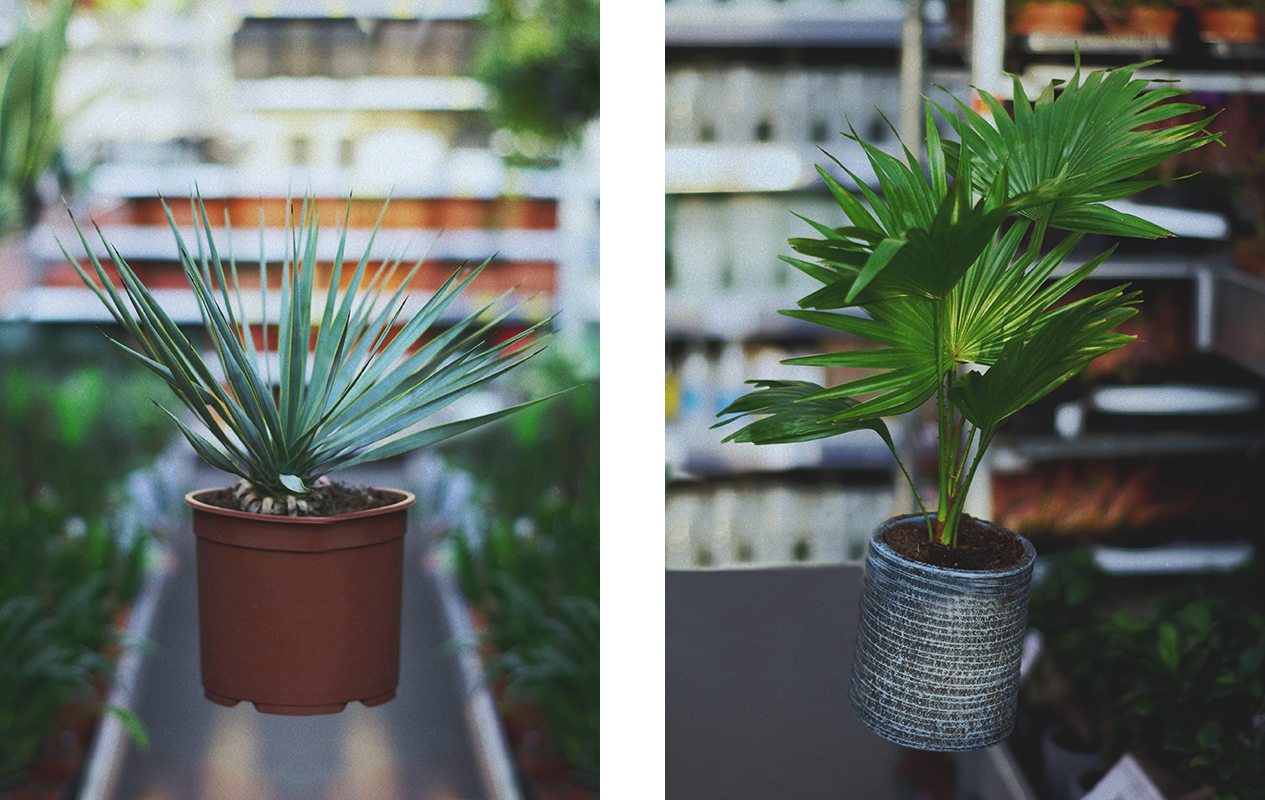 palme-augalai